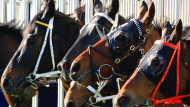 Wagga is the scene for today's races.